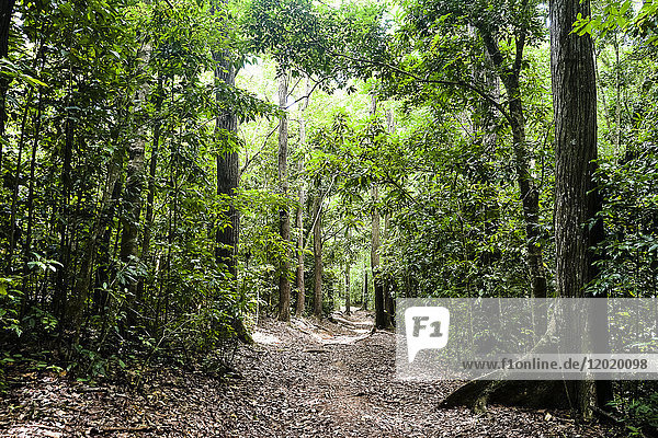 trail in the Montravail's forest  Martinique  France