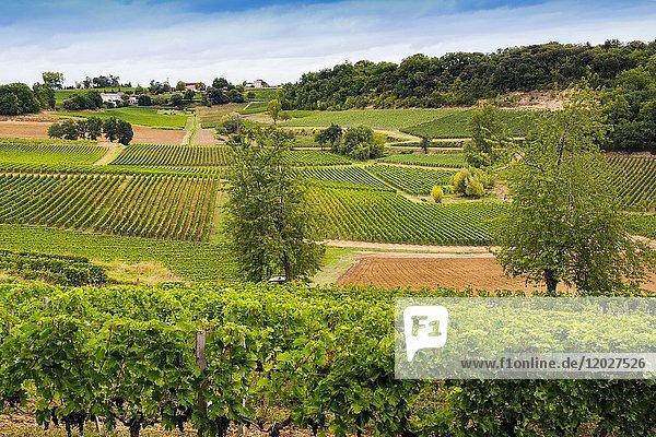 Vineyards. Bordeaux wine region. Aquitaine Region  Gironde Department. France Europe.