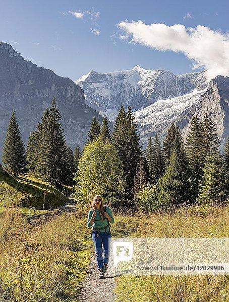 Wanderin auf dem Weg zum Bachalpsee  hinten schneebedeckte Eiger-Nordwand  Eiger  Mönch  Jungfrau  Großes Fiescherhorn  Grindelwald  Bern  Schweiz  Europa