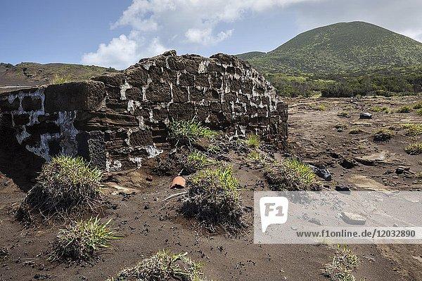 Reste von Häusern ragen aus Lavaasche  Capelo  Insel Faial  Azoren  Portugal  Europa