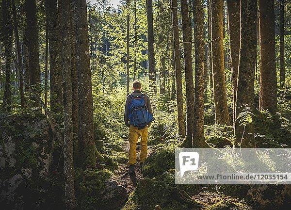Junger Mann im Zauberwald  Ramsau  Nationalpark Berchtesgaden  Berchtesgadener Land  Oberbayern  Deutschland  Europa