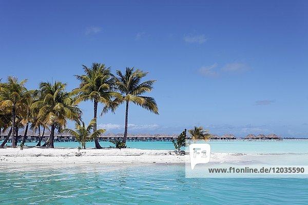 Kleine Halbinsel mit Kokospalmen im türkisen Meer  hinten Resort mit Wasserbungalows  Insel Bora Bora  Gesellschaftsinseln  Französisch Polynesien