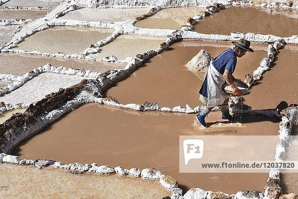 Woman works in terraces for salt extraction  Salinas de Maras  Valle Sagrado  Urubamba  Peru  South America