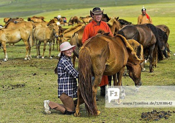 Young Mongolian woman milking a mare  near Erdenet  Mongolia.