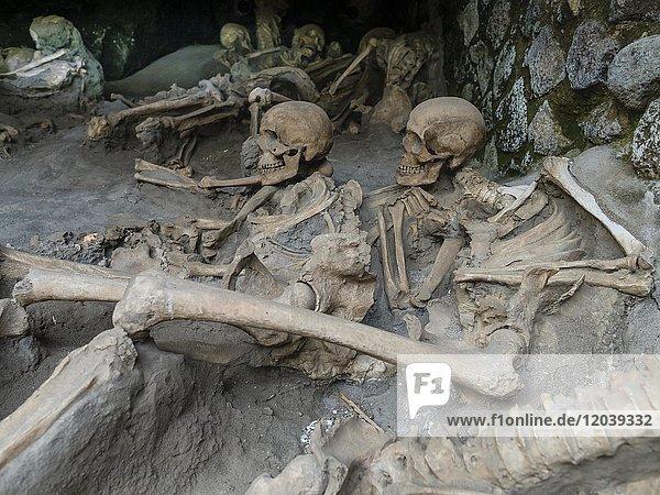 Herculaneum  Totenschädel und Skelette von Vulkanausbruch überraschter Bewohner  Ausgrabungsstätte  Golf von Neapel  Kampanien  Italien  Europa