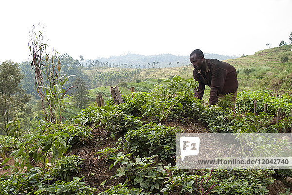 A man works on the kitchen garden at Ngwino Nawe  a centre for disabled children in the far south west of Rwanda  Africa