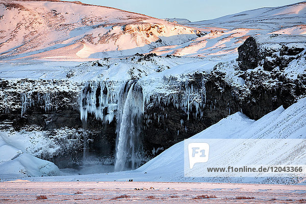 Winter view of Seljalandsfoss Waterfall bathed in evening light  South Iceland  Polar Regions
