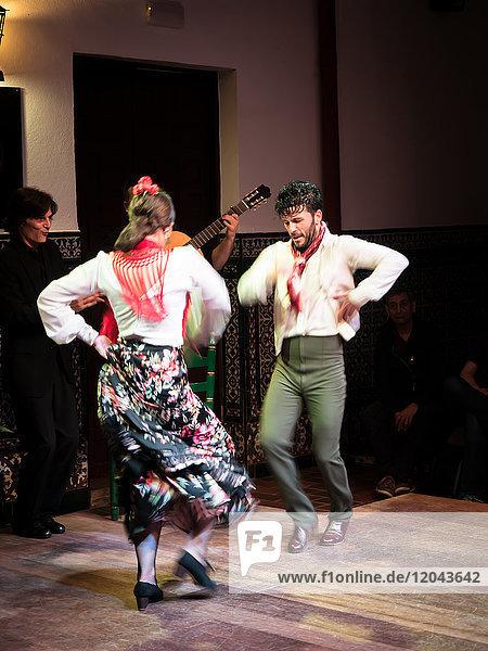 Flamenco dancers and musicians  La Casa del Flamenco  Seville (Sevilla)  Andalucia  Spain  Europe