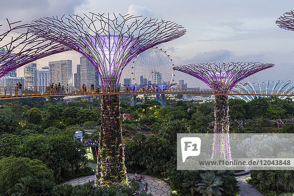 Supertrees at Gardens by the Bay  illuminated at night  Singapore  Southeast Asia  Asia