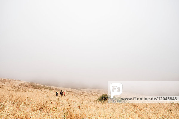 Mother and sons walking in misty field  Fairfax  California  USA  North America