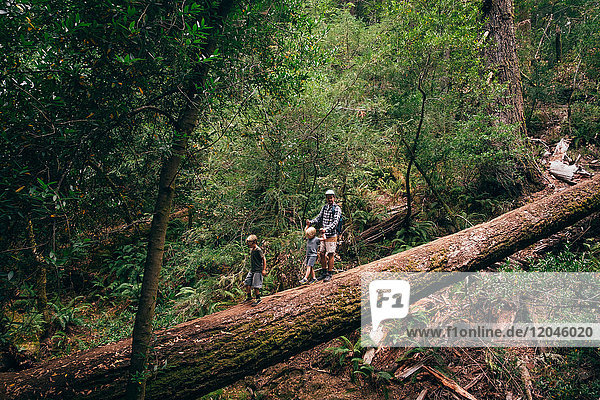 Family walking on fallen tree in forest  Fairfax  California  USA  North America