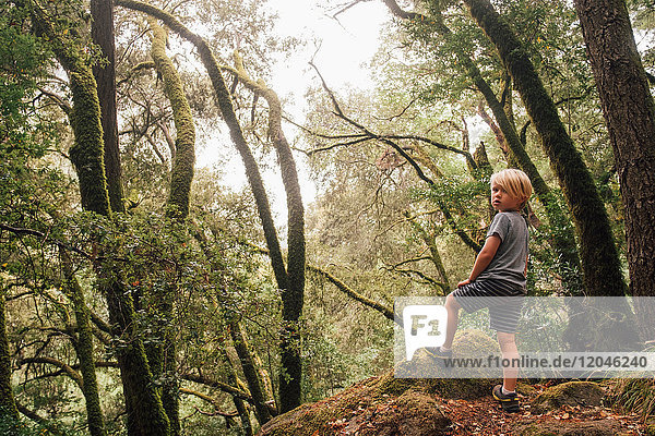 Boy in forest looking over shoulder at camera  Fairfax  California  USA  North America