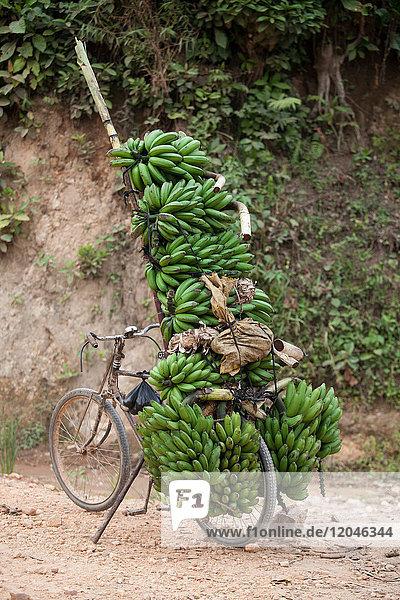 Fahrrad auf Feldweg mit Bananenbündeln gestapelt  Masango  Cibitoke  Burundi  Afrika