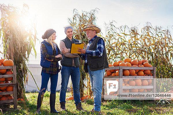 Bauern  die auf einer Kürbisfarm arbeiten