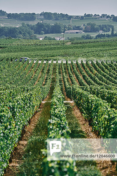 Landschaftsansicht von Weinberg und Weinreben  Bergerac  Aquitaine  Frankreich