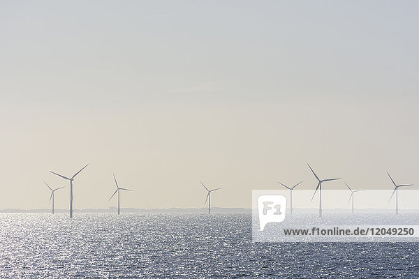 Offshore wind turbine farm with sun shining on the North Sea on a hazy morning  United Kingdom