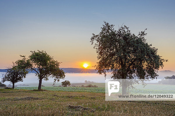 Countryside with morning mist over fields with apple trees at sunrise in Grossheubach in Bavaria  Germany