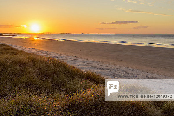 Sun reflecting on the dune grass and beach at sunrise over the North Sea  Bamburgh in Northumberland  England  United Kingdom