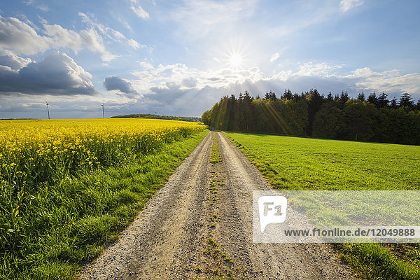 Dirt Road with Sun in Spring  Birkenfeld  Franconia  Bavaria  Germany