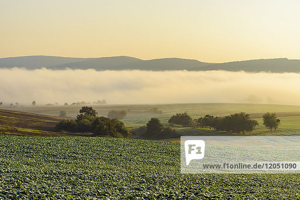 Countryside with morning mist over the fields in the community of Grossheubach in Bavaria  Germany