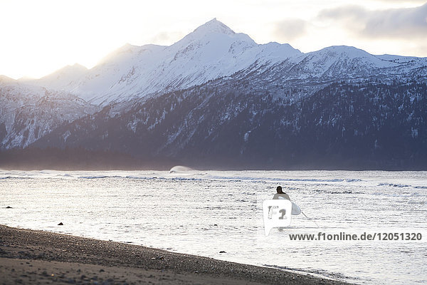 Surfer Carries His Board Out Of Kachemak Bay  Homer Spit  Southcentral Alaska  USA