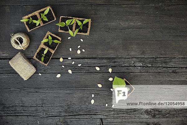 Setzlinge und Samen auf dunklem Holz