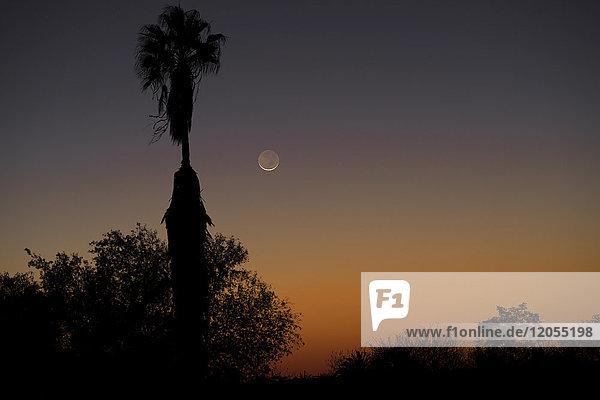 Namibia  Region Khomas  bei Uhlenhorst  Astrofoto  Neumondsichel mit Palmen im Vordergrund