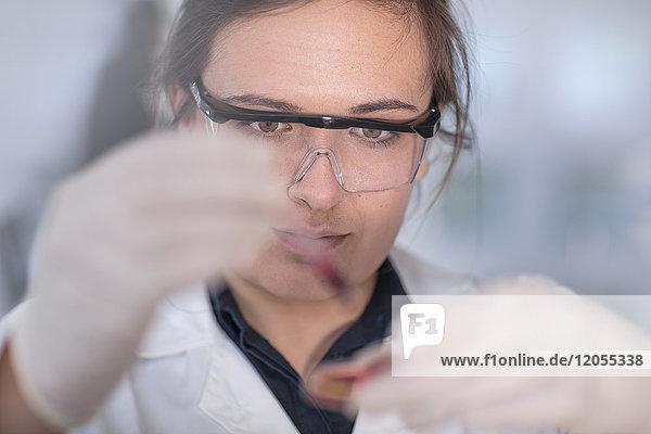 Wissenschaftler arbeitet im Labor mit einer Petrischale
