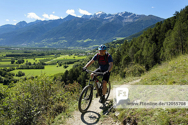 Italy  South Tyrol  Vinschgau  Schluderns  mountain biker on trail
