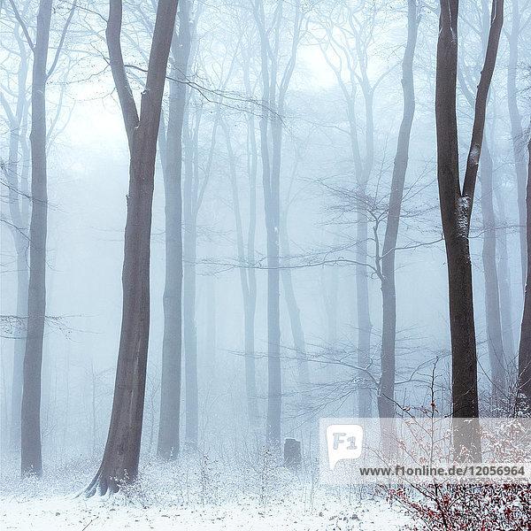 Nebel im schneebedeckten Winterwald