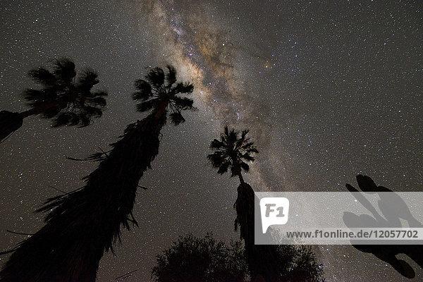 Namibia  Region Khomas  bei Uhlenhorst  Astrofoto  Band of Milky Way mit Galactic Center mit Palmen und Kaktus im Vordergrund
