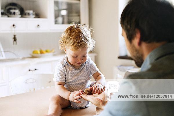 Vater mit kleinem Jungen  der auf dem Küchentisch sitzt und Walnuss untersucht.