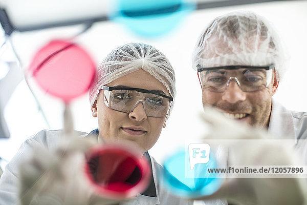 Zwei Wissenschaftler  die zusammen im Labor arbeiten und Petrischalen untersuchen.