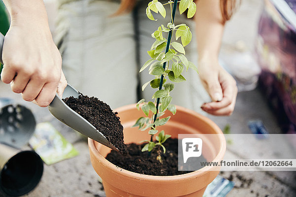 A person potting up a young plant in a terracotta pot and adding soil around the base with a trowel.
