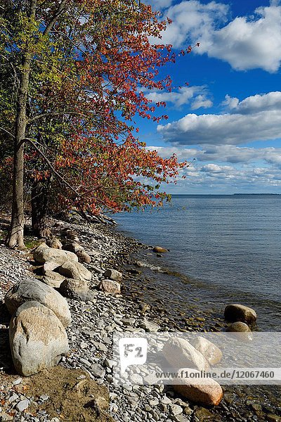 Red Maple tree leaves on shore with rocks and boulders at Prince Edward Bay of Lake Ontario at Waupoos Prince Edward County Canada.