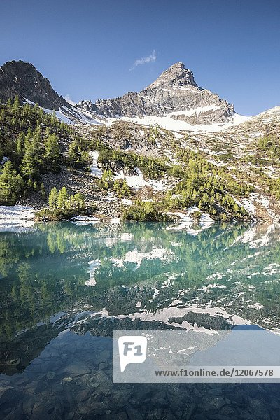 The peak is reflected in Lago Lagazzuolo  Chiesa in Valmalenco  Province of Sondrio  Valtellina  Lombardy  Italy Europe.