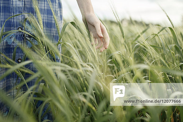 Hand of Caucasian woman in the field of wheat