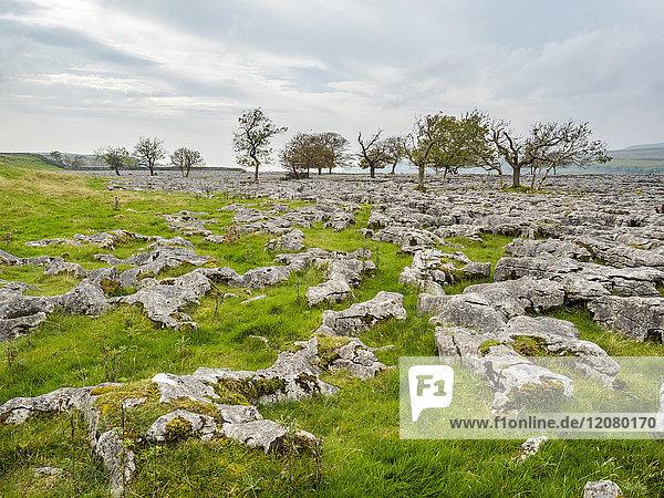 Großbritannien  England  District Yorkshire Dales  Southerscale  Southerscales Nature Reserve  Felsenfeld