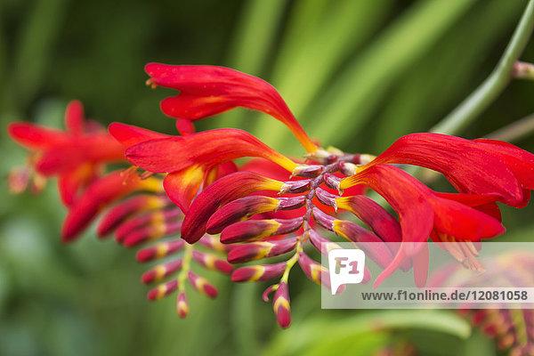 am Tag,Außenaufnahme,Blume,blühen,blühende Pflanze,Blüte