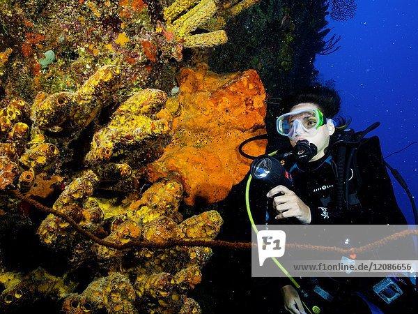 Caribbean Sea Los Roques  woman Scuba-Diver underwater photographer Tour  Underwater  Venezuela  Yellow Tube Sponge -Aplysina fistularis-