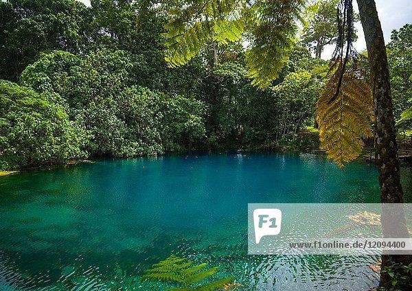 Matevulu blue hole  Sanma Province  Espiritu Santo  Vanuatu.