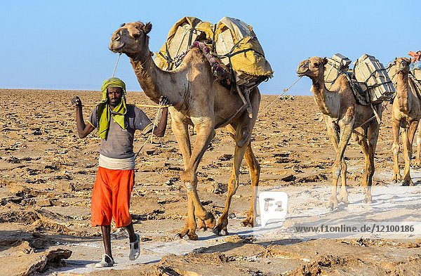An Ethiopian man guides his camel train through the Danakil Depression in Northern Ethiopia.