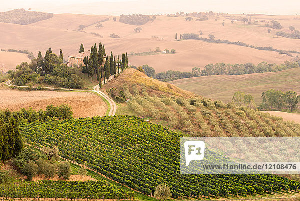 Rolling landscape with vineyard and farmhouse  Tuscany  Italy
