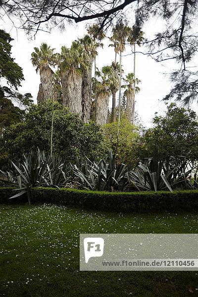 Park  Lissabon  Portugal