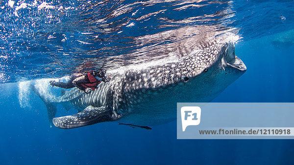 Taucher an der Seite eines Walhais