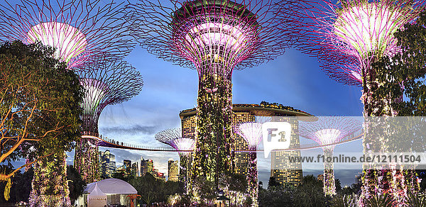 Singapore  Gardens by the bay  Supertree Grove  illuminated at night