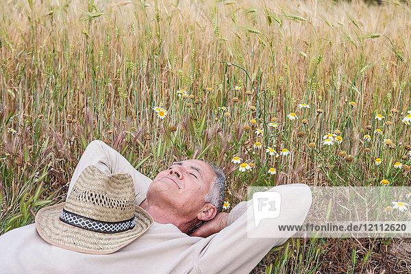 Mann mit Händen hinter dem Kopf in der Wildblumenwiese liegend