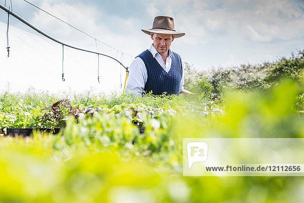 Farmer harvesting plants