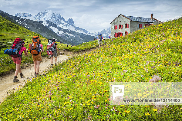 Hikers walking on Col de Balme in wildflower meadow with Mount Blanc Range and Refuge du Col de Balme in the background  Alps  Swiss-French border; France