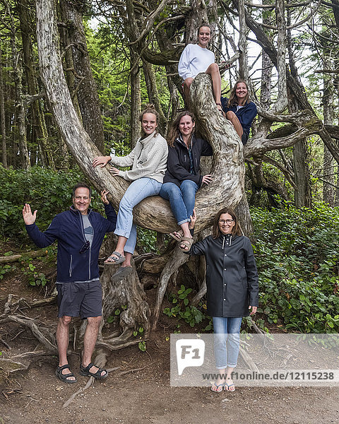 A family portrait with four daughters in a tree on Vancouver Island; Ucluelet  British Columbia  Canada